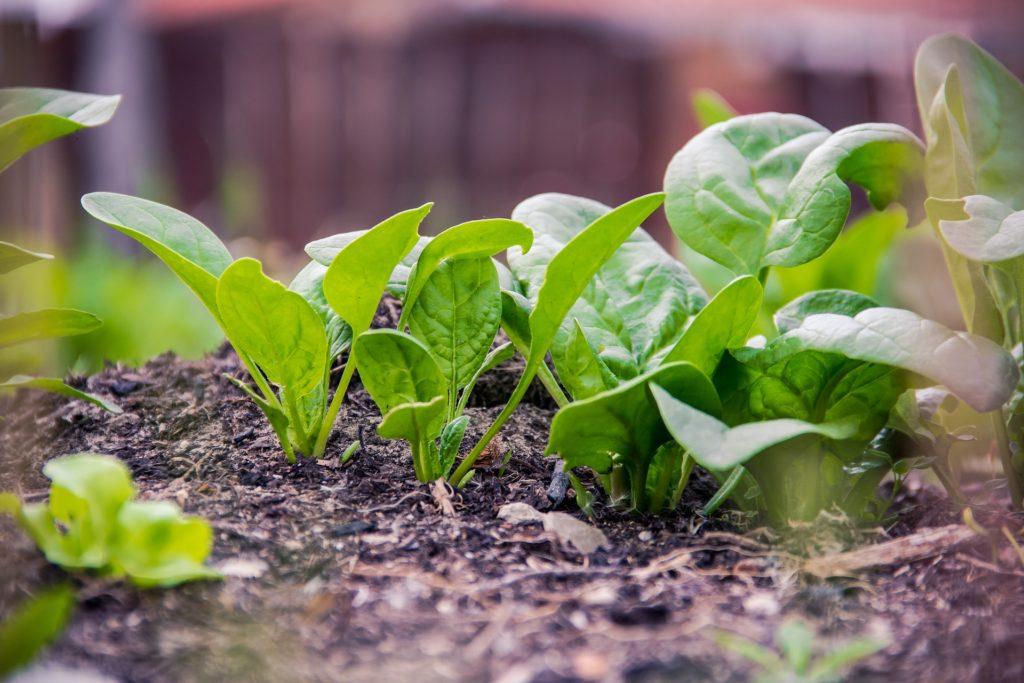Beneficios de la comida ecológica