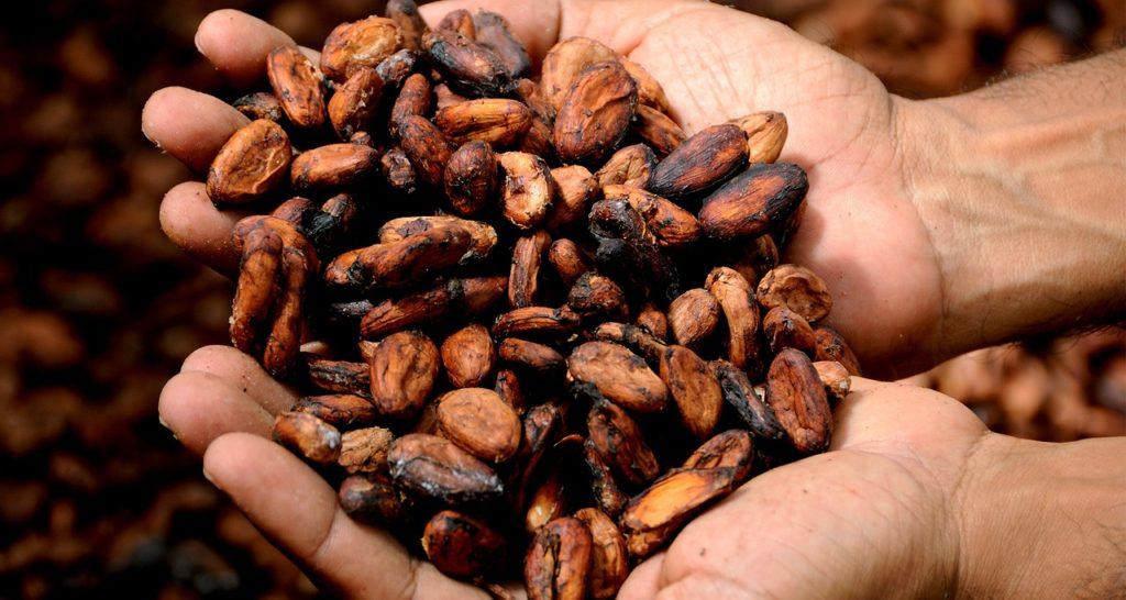 Beneficios del cacao y todas sus propiedades