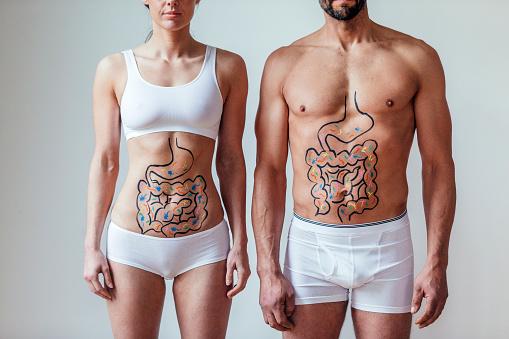 Aparato digestivo. Lugar dónde se encuentra el estómago.